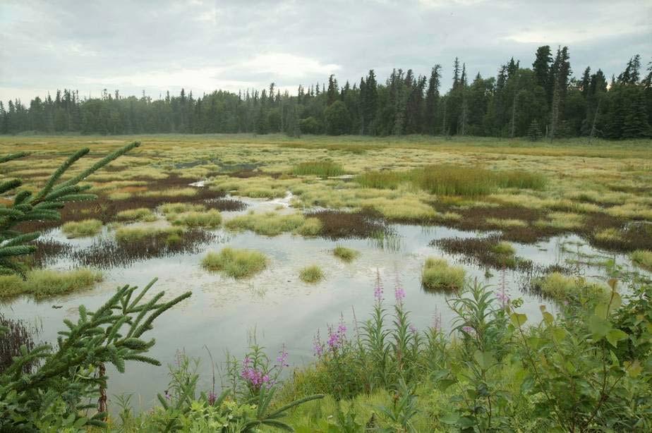 Wetland Creation Dredging