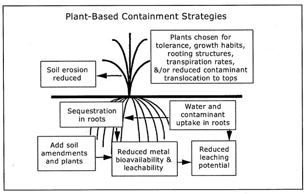 Plant based dredge sequestration containment strategies